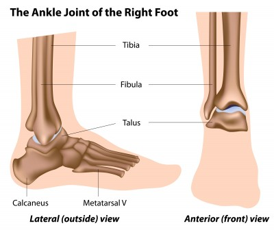 Ankle Pain- Ankle Anatomy