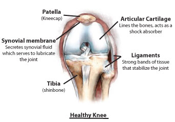 Knee Anatomy- What causes Knee Pain