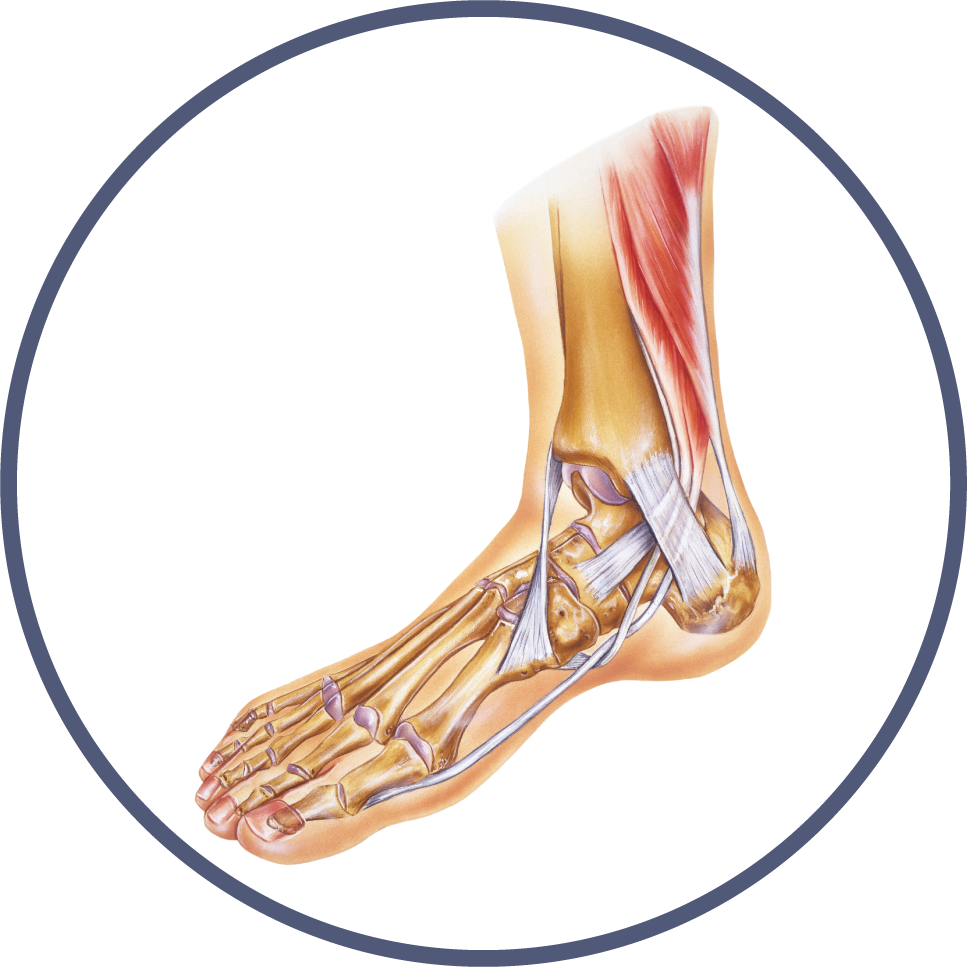Foot & Ankle Orthopedic Library